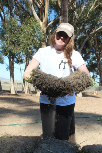 Isabelle moving sod to the soccer field at Vaatjie Primary School.