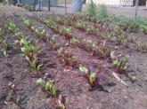 Vaatjie Primary School Garden